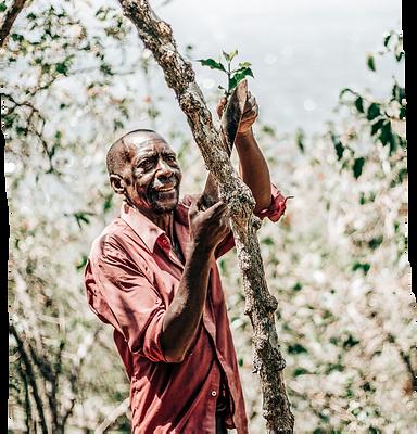 omwani-pruning-tree.png