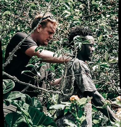 james-harvesting-coffee-alongside-farmer