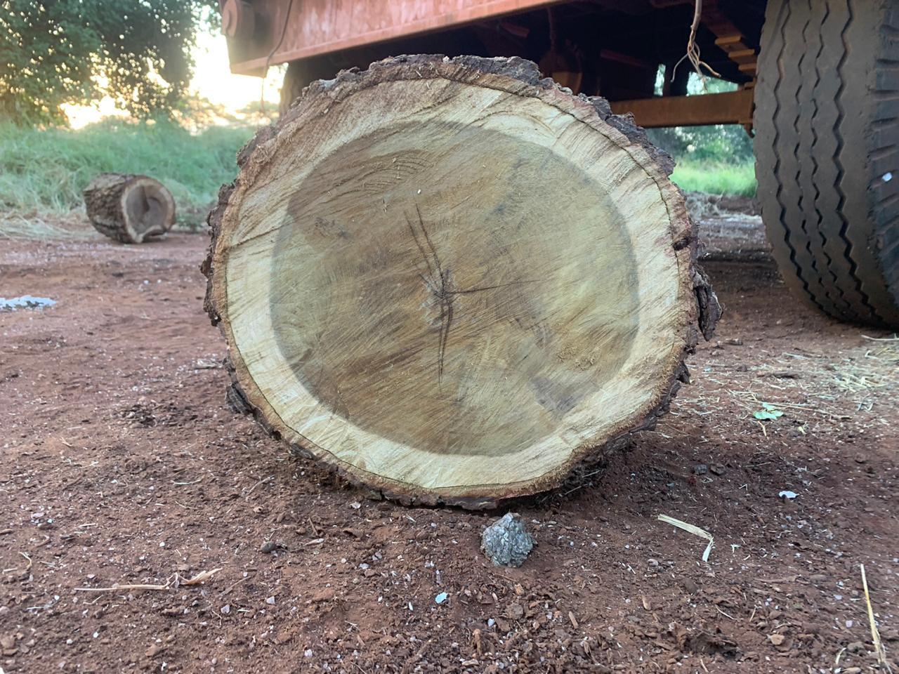 Cottondale wood