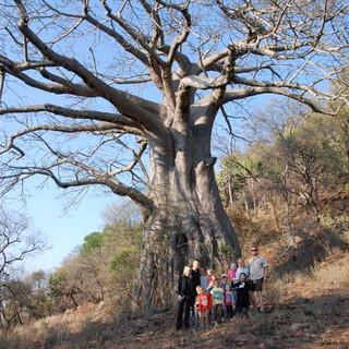 Baobab at Kilima