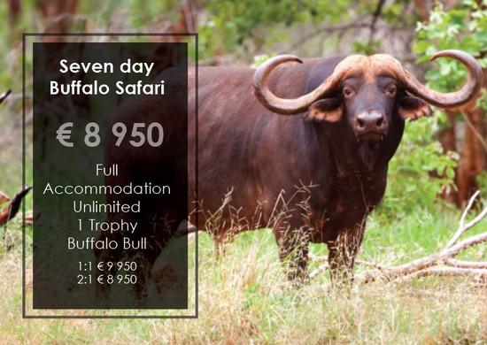 Buffalo Safari Special