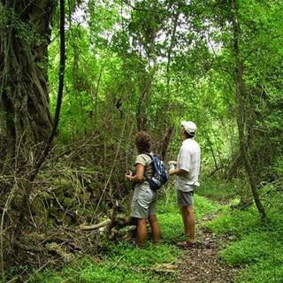 De Hoek forest