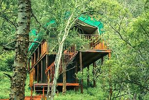 Kilima Luxury Treetop Tent