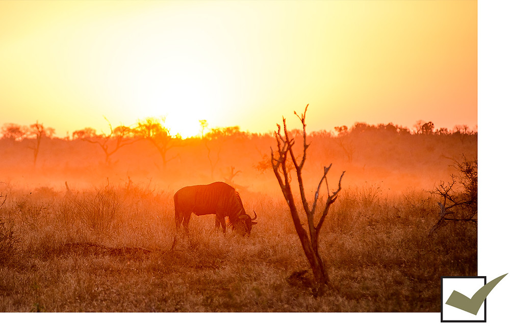 Exotic Game experience at Kilima Private Game Reserve & Spa