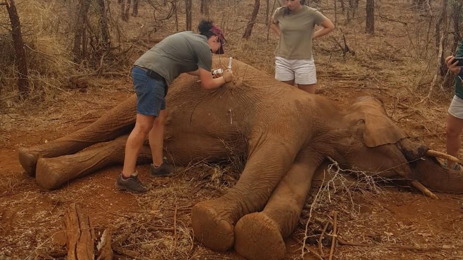Treating an elephant