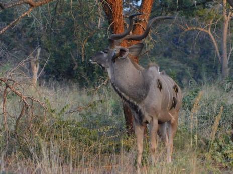 Kilima kudu