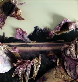 Lilac Land