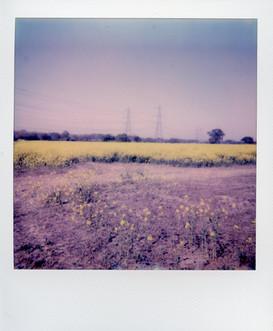 Sun fields
