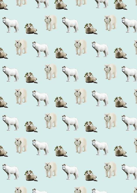 Wolf - zeehond - ijsbeer