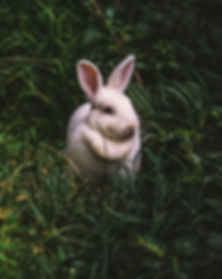 Rabbit_edited.jpg