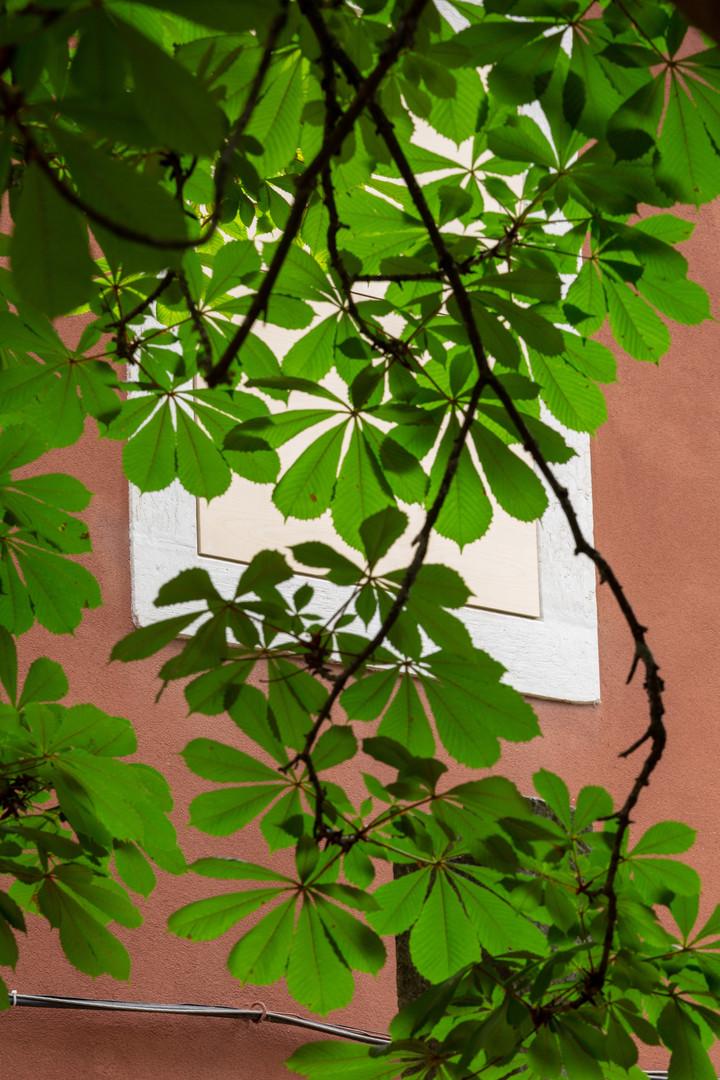 Estudos do Labirinto Jardim Botânico Tropical Armanda Duarte, residência, 2018  ar, sombra, madeira de bétula, uma mosca, um pequeno pássaro  [Casa do Pátio do Ourives]