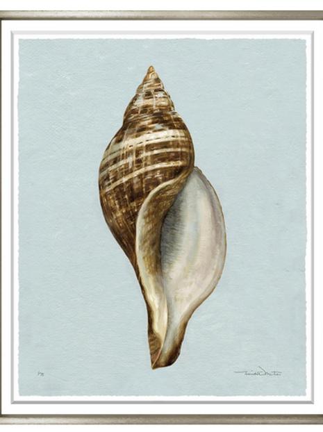 #8209 Sepia Shell 2