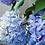 Thumbnail: #9748 Happily Hydrangea Painting Kit