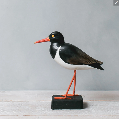 #5551 American Oyster Catcher