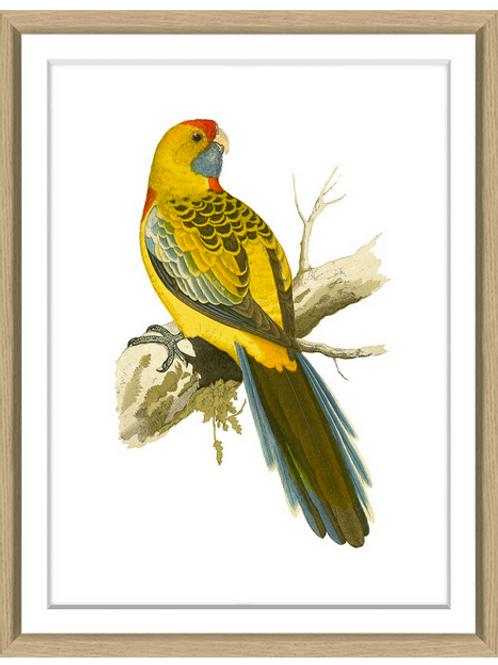 #8203 Green's Parrots 2
