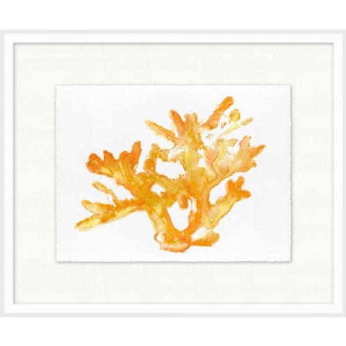 #11006 Orange Coral 1