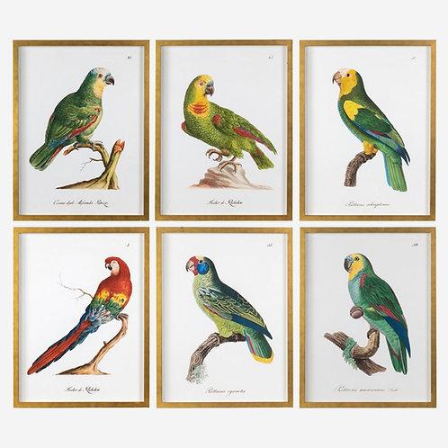 #12170 Parrots Wall Art