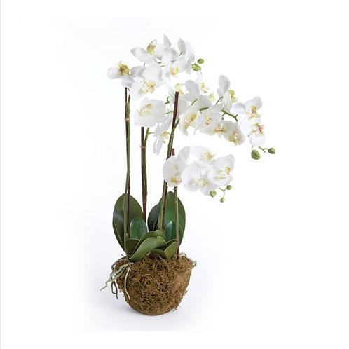 """#9010 Phalaenopsis 30"""" Drop-In, White"""