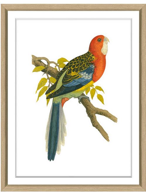 #8206 Green's Parrots 10