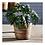 Thumbnail: #10457 LG Wrapped Dry Basket Planter