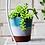Thumbnail: #9987 Garden Ombre Cachepot (Small Mint)