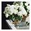 Thumbnail: #10463 XL White Garden Rose Arrangement in Vase