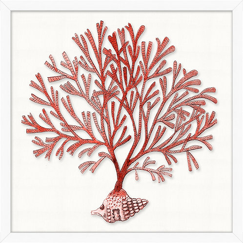 #11479 Red Branch Coral 1