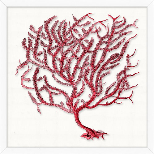 #11477 Red Branch Coral 3