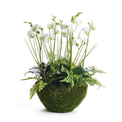 "#10429 Phalaenopsis & Fern Drop-In; 18"""