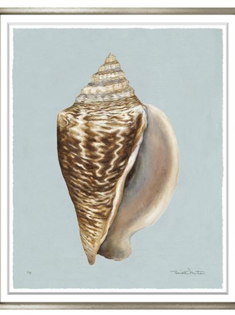 #8210 Sepia Shell 3