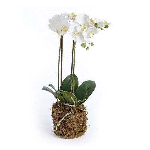 "#3411 Phalaenopsis Orchid Drop-In 30"""