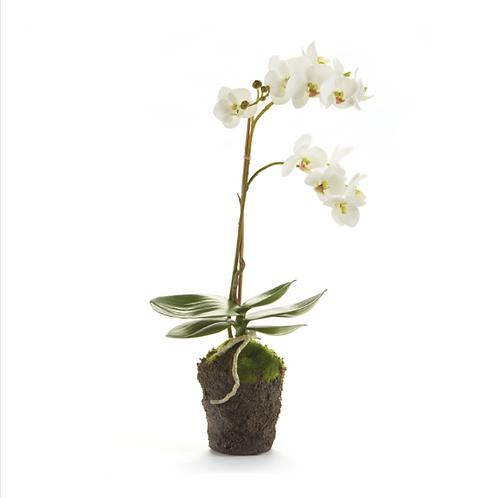 "#7082 Phalaenopsis Orchid Drop-In 17"""