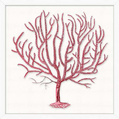 #11476 Red Branch Coral 5