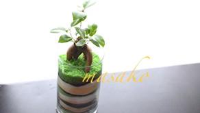 カラーサンドで楽しむ観葉植物
