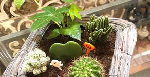 NFDフラワーデザイナーディプロマコース、インドアレッスン参加作品「観葉植物と多肉」