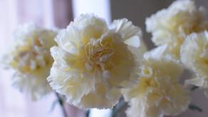お花の入荷紹介