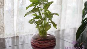 MASASKOフラワーデザイン 趣味で楽しむフラワーレッスンで水栽培の「カラーサンドで楽しむ観葉植物」を受講なさいました、のりこさんの作品をご紹介いたします。