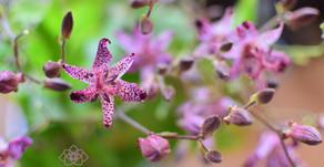 最近レッスンで使用した花材のご紹介