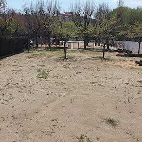 El próximo 18 de abril, comienza el proyecto de plantación de árboles de la escuela Collserola