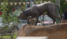 Catherine Anderson original fine art bronze sculpure kelpie dog, bonalbo working dog sculpture