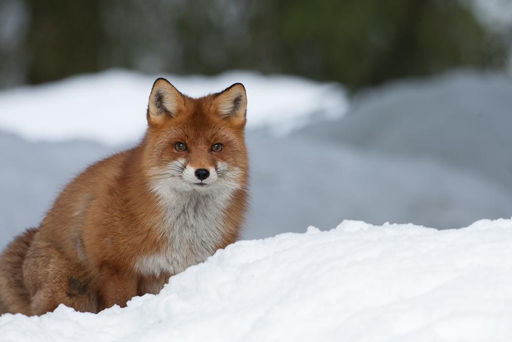FOX9227