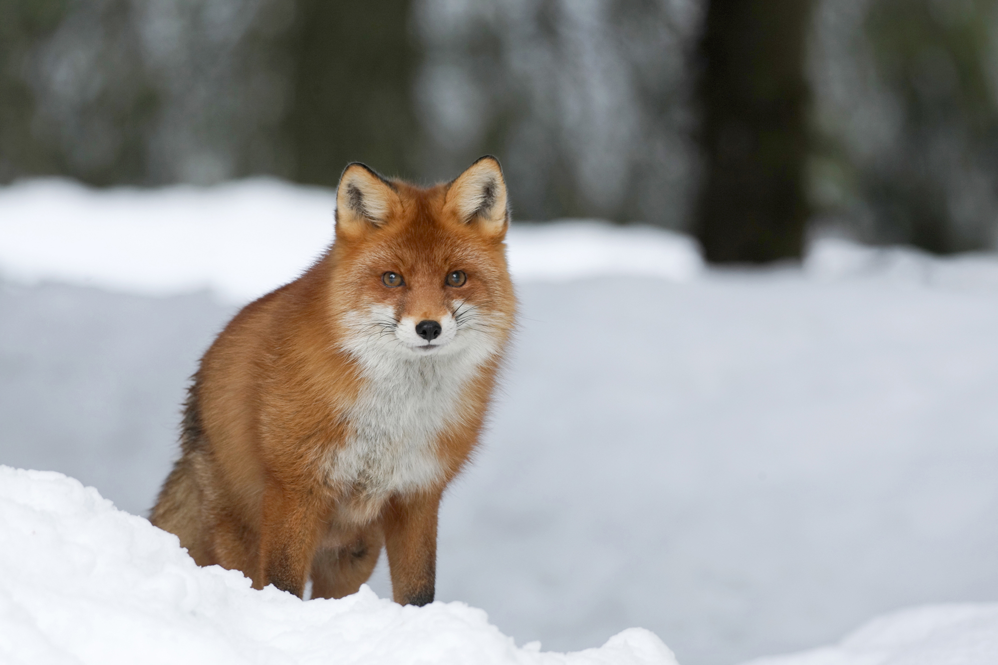 FOX9234