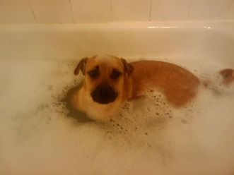 DAISY_LAYDOWN_BATH.jpg