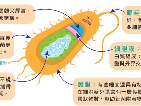 細菌咁樣樣