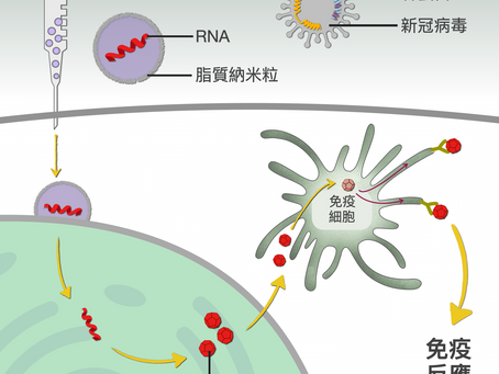 mRNA疫苗