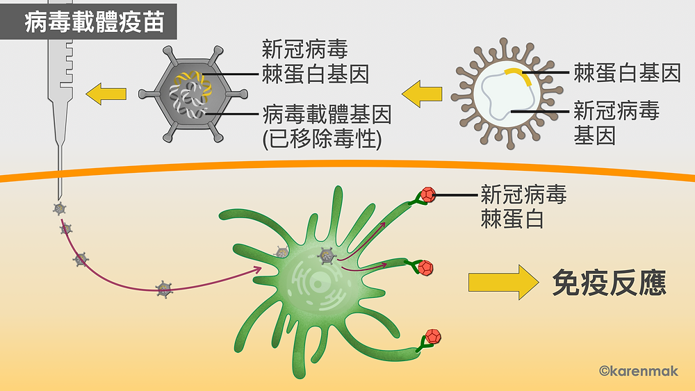 viral vector vaccine