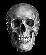 skully no bg.png