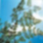 Moringa_leaves_pics.png