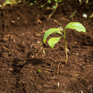 One_Tree_Planted-28-compressor.jpg