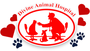 Divine Animal Hospital